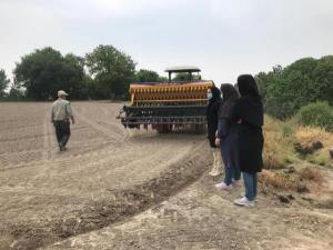 نخستین کشت بدون آب برنج در بهشهر