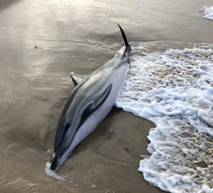 نجات بچه دلفین در ساحل