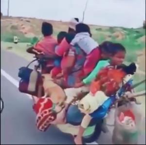 یک صحنه کاملا عادی در هند!