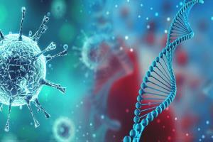 شناسایی ۵ مورد ابتلای قطعی به ویروس آفریقایی در هرمزگان