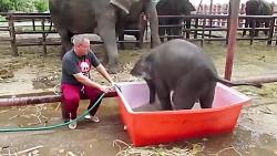 آبتنی بامزه یک بچه فیل