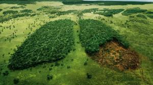 تایم لپسی شوکه کننده از نابودی جنگلهای زمین طی 40 سال!