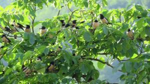 هجوم پرندگان پر سر و صدا به شمال و شمال شرق کشور