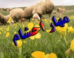 مهار ۵۰۰ رأس دام قاچاق در مرز حصارچه