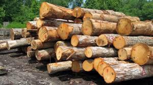 توقیف یک دستگاه خودرو حامل چوب درختان جنگلی در فیروزآباد