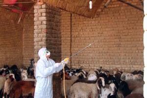 هشدار دامپزشکی لرستان در خصوص احتمال شیوع تب کریمه کنگو