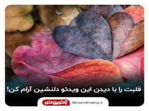 قلبت را با دیدن این ویدئو دلنشین آرام کن!