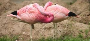 چگونه برخی حیوانات ایستاده میخوابند؟