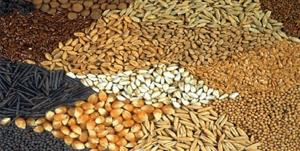کشف ۲۳ تن خوراک دامی خارج از شبکه توزیع در سمنان