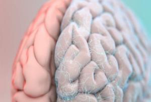 مغز، نحوه نگه داشتن ابزار با دست را رمزگذاری می کند