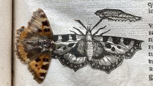 کشف یک پروانه ۴۰۰ ساله در میان صفحات کتابی قدیمی!