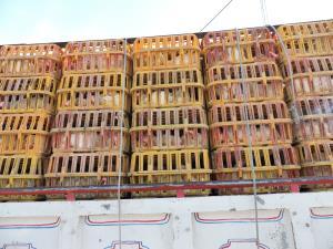 کشف مرغ زنده قاچاق و مواد دارویی غیر بهداشتی در کرمان