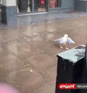 ساندویچ تن ماهی دزدید!
