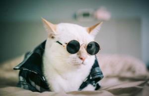 گربه ی مدلینگ با درآمدی بیشتر از آدم ها
