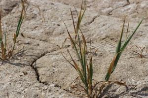 میزان بارندگی در دشتی ۶۳ درصد کاهش یافت