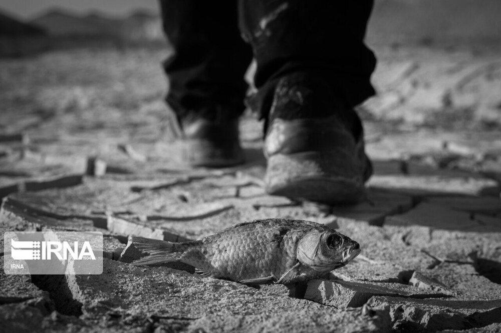 قابهایی تاثربرانگیز و غمناک از خشکسالی در سیستان و بلوچستان