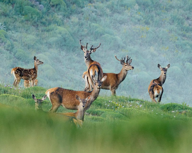 حیات وحش ارتفاعات مازندران