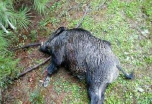 افادهفروشی در اینستاگرام پای شکارچی گراز را به زندان باز کرد
