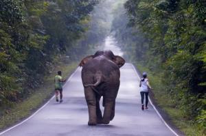 افتادن یک مرد هندی زیر دست و پای فیل عصبانی