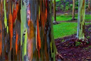 نگاهی به متفاوتترین درختهای جهان