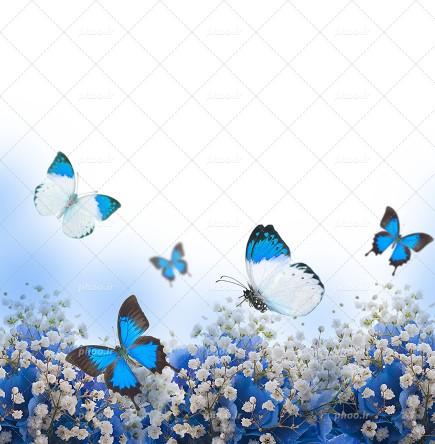 سلام بروبچ ب�رمایید داخل🤞�(گپ پروانه های آبی)