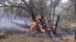 آتشسوزی جنگلها و مراتع منطقه شاه بهرام باشت مهار شد