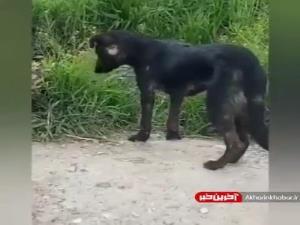 سگی که علف میخورد!