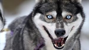 واکنش خنده دار یک سگ به رعد و برق