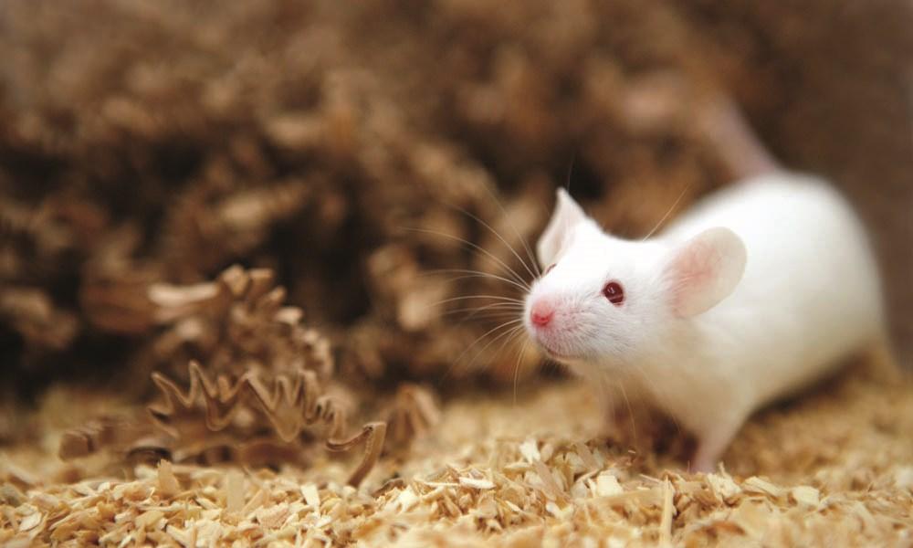 پستانداران می توانند از راه مقعد هم نفس بکشند!