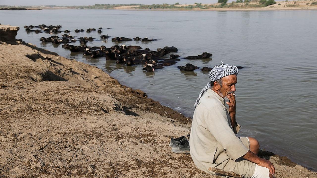 سقط جنین گاومیشها به دلیل آلودگی آب در حمیدیه