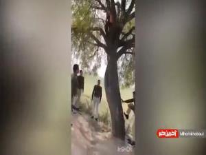 دستگیری سارق فراری روی درخت!