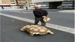 حیوان خانگی پیرمرد ژاپنی، شهروندان این کشور را متعجب کرد!