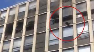 پرش گربه از طبقه پنجم ساختمان غرق آتش!