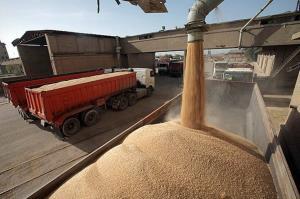 مصرف سالانه گندم در لرستان ۳۰۰ هزار تن است