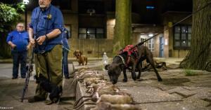 شکار موشهای خیابانی با سگهای خانگی
