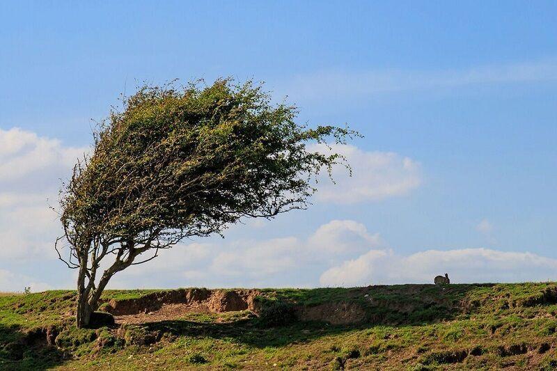 وزش باد شدید با احتمال ایجاد خسارت خراسان رضوی را فرا میگیرد