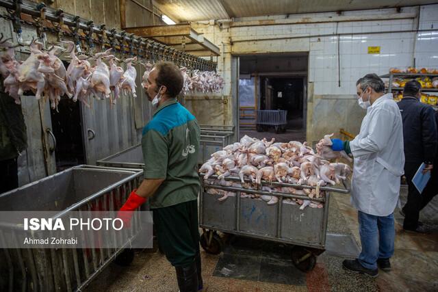 یک دلیل برای گرانفروشی مرغ کشتار روز در بازار خوزستان