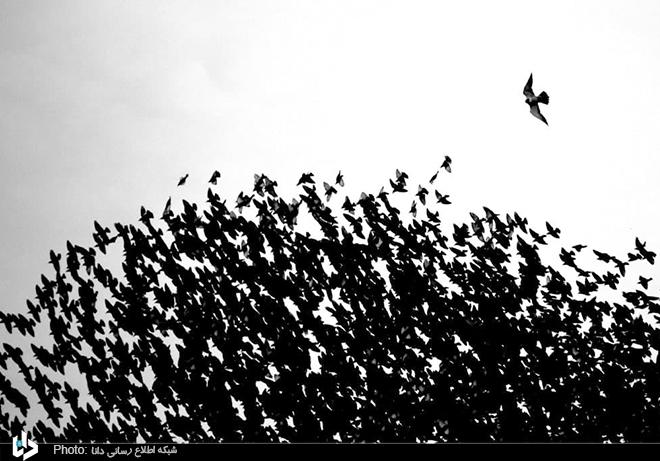 نقاشی پرندگان در آسمان