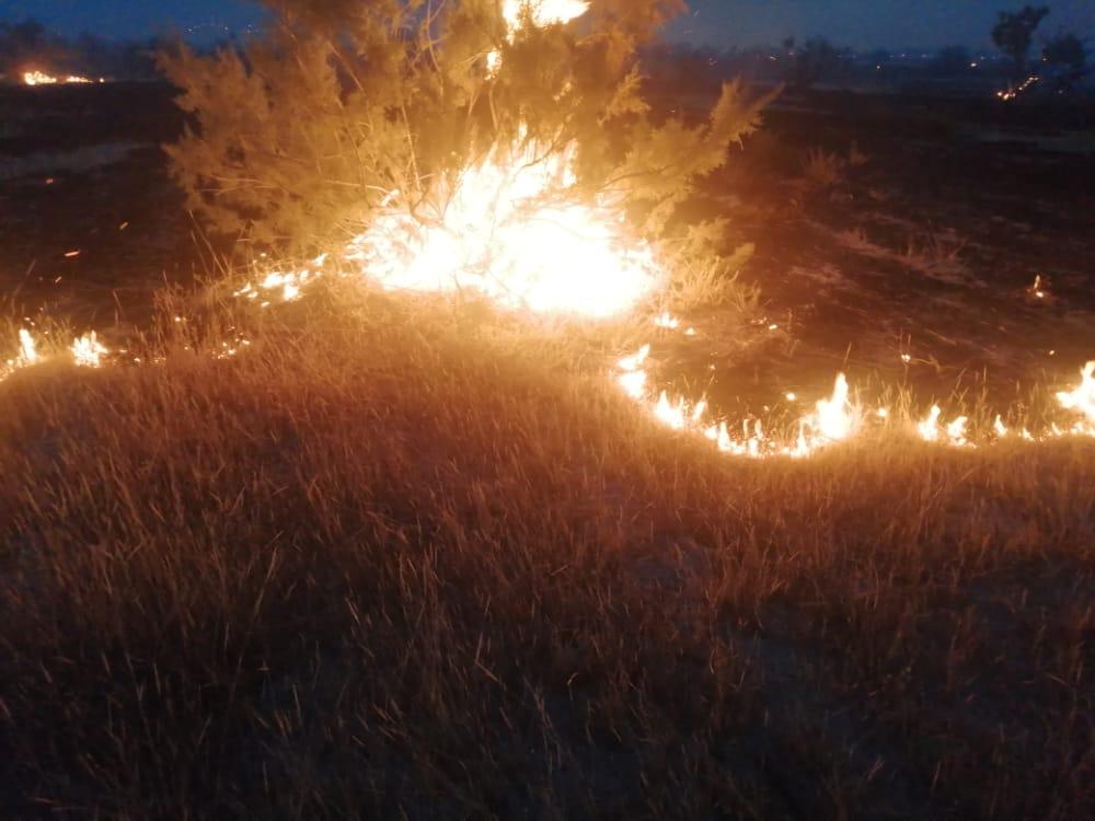 ۴ هکتار از مزارع گندم فسا در آتش سوخت