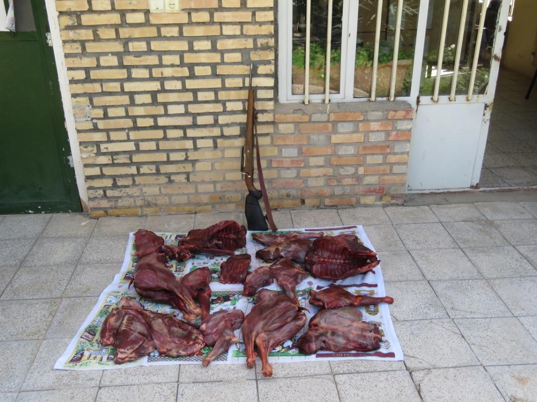 باند شکار وحوش در جغتای متلاشی شد