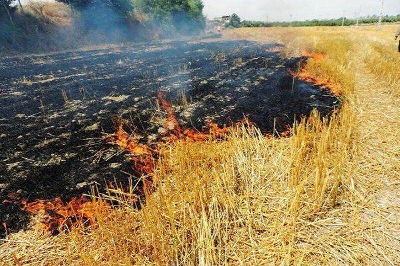 برخورد جدی با عامل آتشزدن مزارع در لرستان صورت گیرد