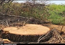 قطع درختان ۱۰۰ساله در دشت ارژن شیراز