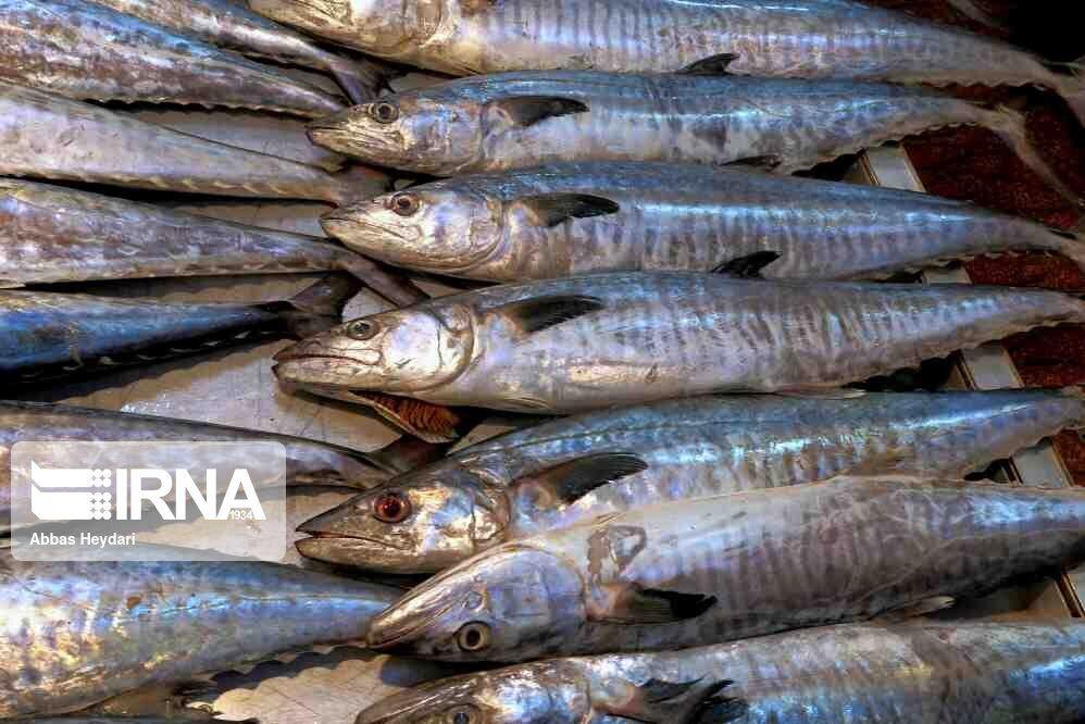 سرانه مصرف ماهی در بروجرد ۷.۶ کیلوگرم است