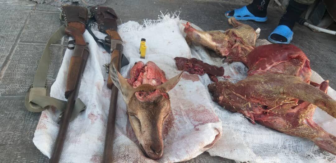 شکارچیان بز وحشی در دام محیط بانان طارم سفلی افتادند