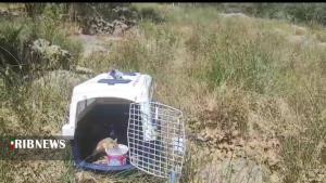 بازگشت سنجابهای کشفشده در خراسان جنوبی به زیستگاهشان در کردستان