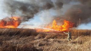 ۳۳۲ هکتار جنگل و مرتع در کردستان طعمه حریق شد