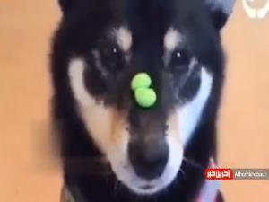 سرعت عجیب یک سگ خانگی در بلعیدن غذا