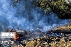 ۱۹۰ هکتار از جنگلهای کردستان در آتش سوخت
