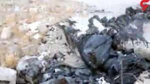 ماجرای سوزاندن 50 سگ در کیسه زباله