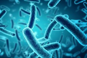 باکتریها بیشتر در کدام قسمت بدن جمع میشوند؟